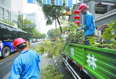 南京鼓楼园林工人修剪树枝排隐患