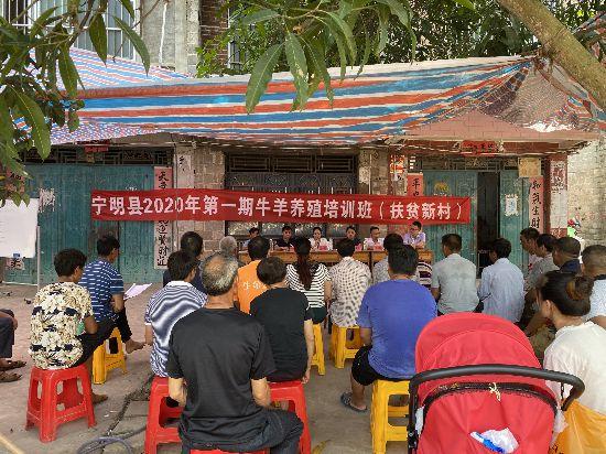 宁明举办牛羊养殖培训班
