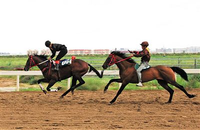 中国・内蒙古马赛暨第七届内蒙古马术节在锡林浩特开幕