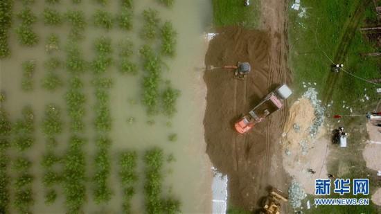 湖南岳阳:处置防洪大堤险情