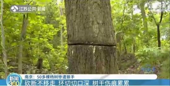 """南京:""""杀害""""树木也入刑!附近居民:手段残忍"""