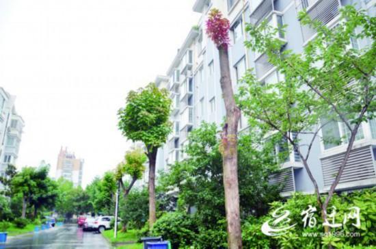 宿迁:小区绿化树被野蛮修剪 居民有人叫好有人愁
