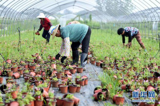 (防汛抗洪)(1)安徽肥西:积极开展生产自救