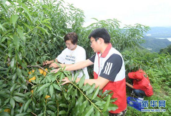 (经济)(1)浙江诸暨:爱心志愿助农售桃