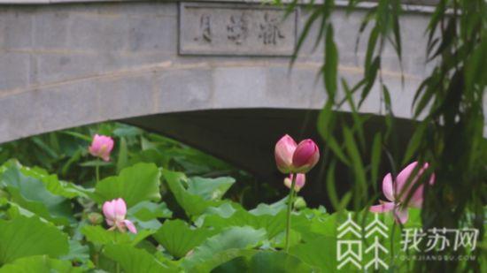 南京首例!擅採並蒂蓮游客被納入不文明行為記錄