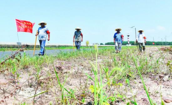 """▲8月5日,在肥东县长临河镇境内的巢湖大堤,党员们手持自制木棍,用""""土办法""""对堤坝的薄弱点进行实时探寻,以确保大堤若有险情可及时发现。 记者 郭如琦 摄"""