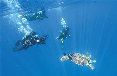 """99只救治康复海龟在陵水踏上了""""回家""""之旅"""