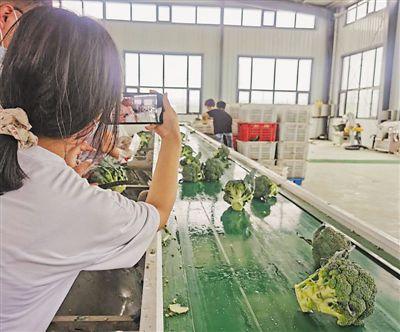 冷涼蔬菜產業鏈串起農民致富夢
