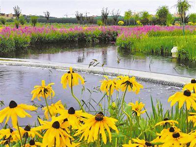 人工湿地让污水变清流