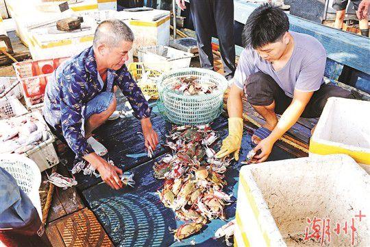 潮州饶平三百门渔港码头:开渔归来鱼满舱