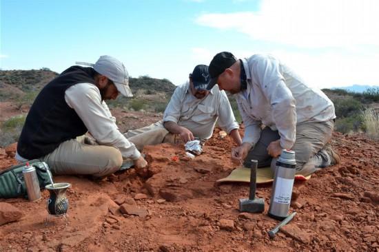 (国际・图文互动)(1)阿根廷古生物学家复原2亿多年前乌龟化石