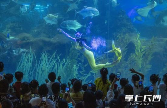 """长沙海底世界,""""美人鱼""""的表演吸引众多孩子们拍手叫好。长沙晚报全媒体记者 邹麟 摄"""