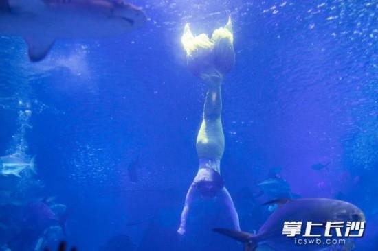 美人鱼在水中需完成一套难度动作。