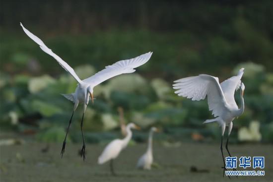 #(環境)(4)鷺舞濕地