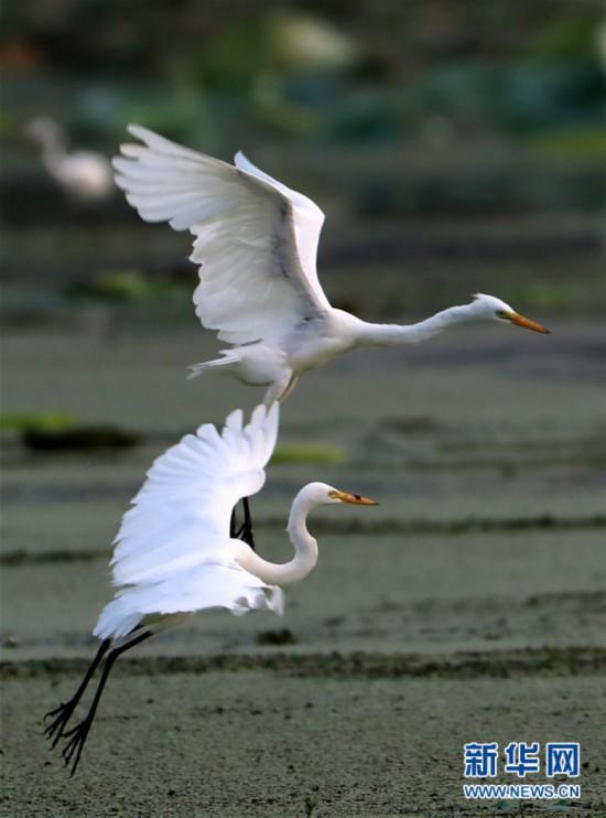 #(環境)(3)鷺舞濕地