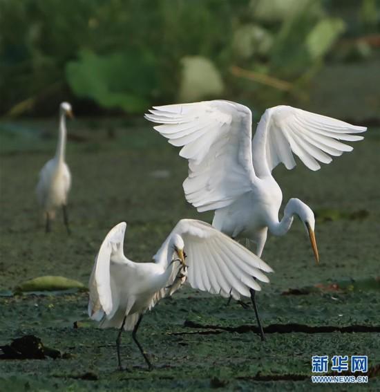 #(環境)(2)鷺舞濕地