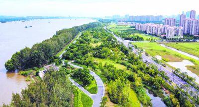 南京江心洲环岛绿带呈现美丽画卷