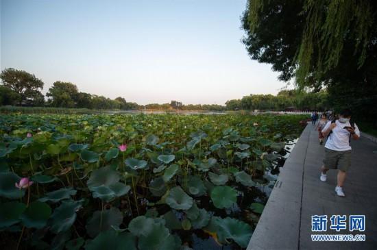 (走向我们的小康生活)(5)北京:老百姓家门口的绿地公园