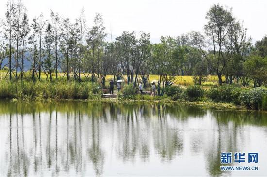 (環境)(3)暢游廣陽島 體驗生態修復成果