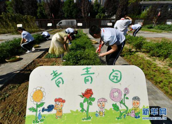 西安:农耕体验迎开学