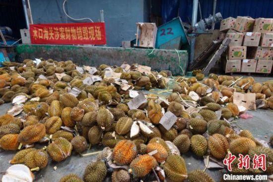 广西水口海关无害化销毁49.58吨涉嫌走私入境水果案值约120万