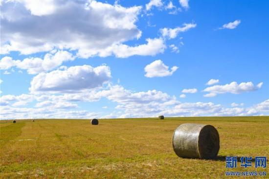 (社会)(5)内蒙古锡林郭勒:草原迎来打草季