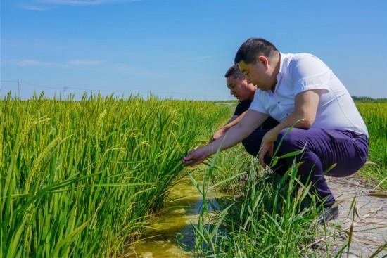 """(图文互动)(4)""""河湖连通""""连通小康生活――吉林西部生态治理见闻"""