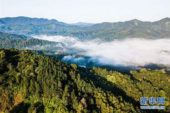 (环境)(5)探访海南热带雨林国家公园