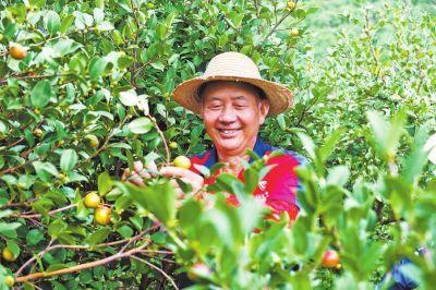 山油茶美了乡村富了农家