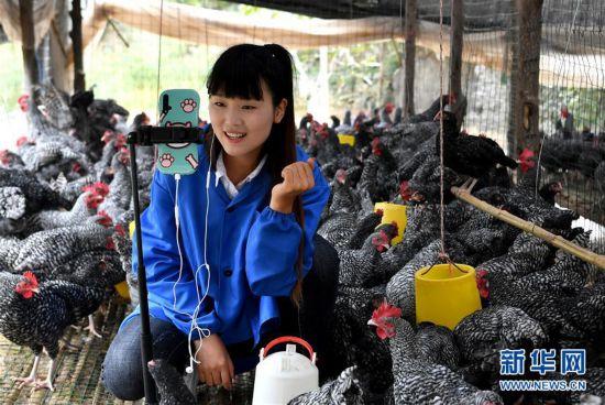 (图片故事)(6)秦岭山区女主播 抱着鸡儿做直播