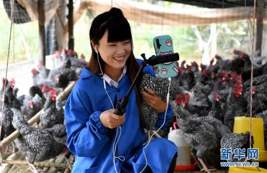 (图片故事)(9)秦岭山区女主播 抱着鸡儿做直播