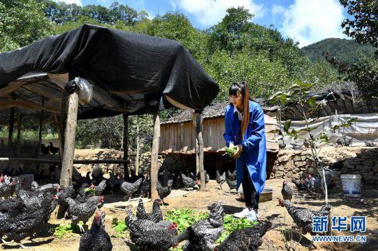 (图片故事)(2)秦岭山区女主播 抱着鸡儿做直播
