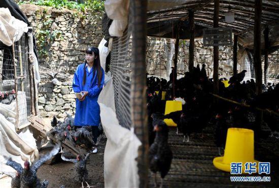 (图片故事)(4)秦岭山区女主播 抱着鸡儿做直播