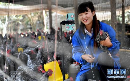 (图片故事)(8)秦岭山区女主播 抱着鸡儿做直播