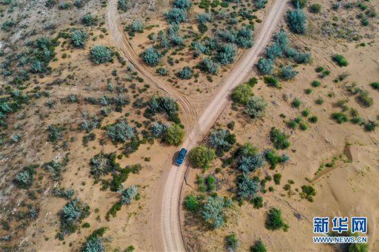 (环境)(3)库布其沙漠披绿装