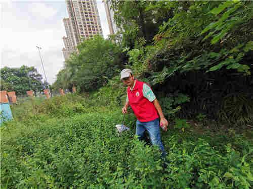何东胜主任在绿化带中清理白色垃圾