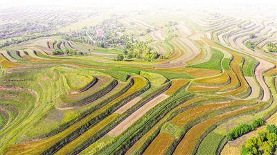 宁夏原州区:最是幸福丰收时