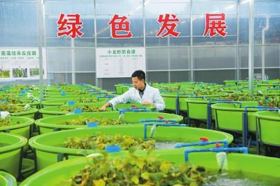 中国西部小龙虾良种繁育中心