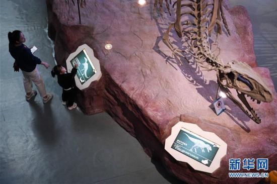 (社会)(1)合肥:博物馆里度假期
