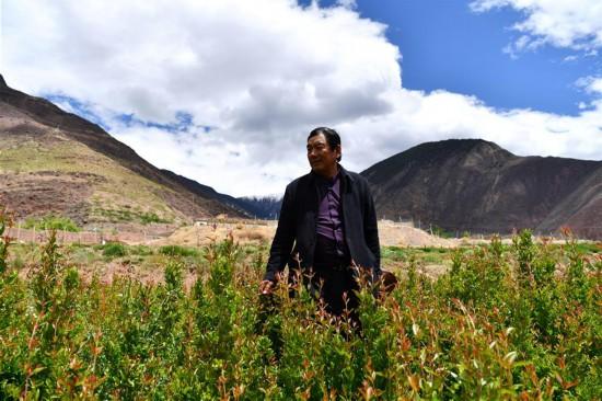 """(西藏昌都解放70周年・图文互动)(4)""""我有一个植树梦""""――扎西旺堆和他的""""绿色家园"""""""