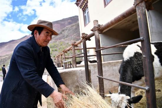 """(西藏昌都解放70周年・图文互动)(3)""""我有一个植树梦""""――扎西旺堆和他的""""绿色家园"""""""