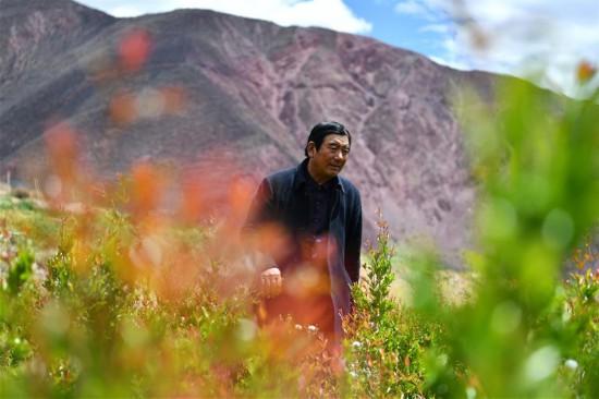 """(西藏昌都解放70周年・图文互动)(1)""""我有一个植树梦""""――扎西旺堆和他的""""绿色家园"""""""