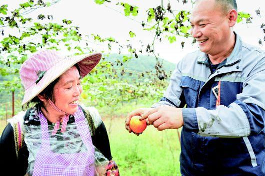 基地负责人为农户讲解吊瓜种植技巧。