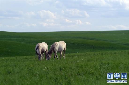 """(环境)(2)内蒙古""""十三五"""":美丽发展互惠双赢"""