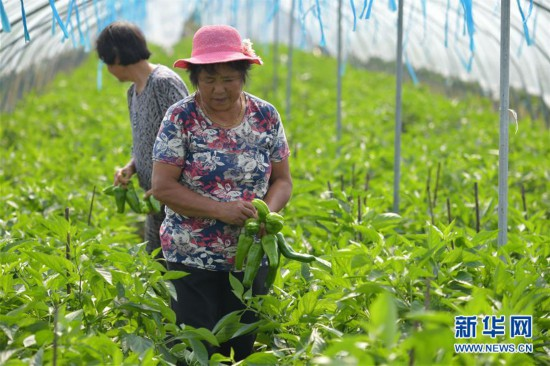 (经济)(1)南昌新建:设施农业助增收