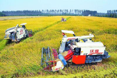 南京各粮食主产区抢抓秋收 机械助力省心省力