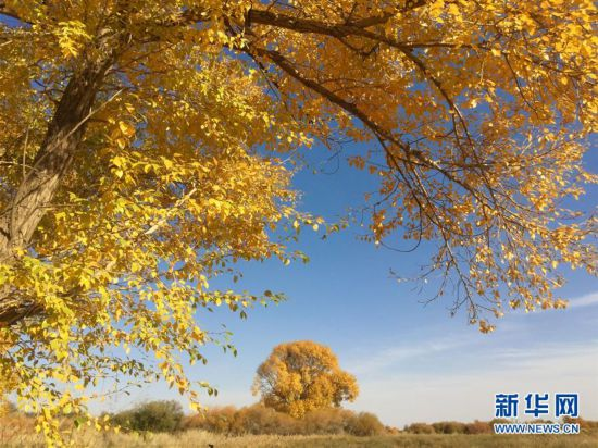 """(美丽中国)(2)秋色斑斓耀""""沙乡"""""""