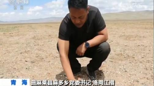 种草两年青藏高原部分沙化区修复