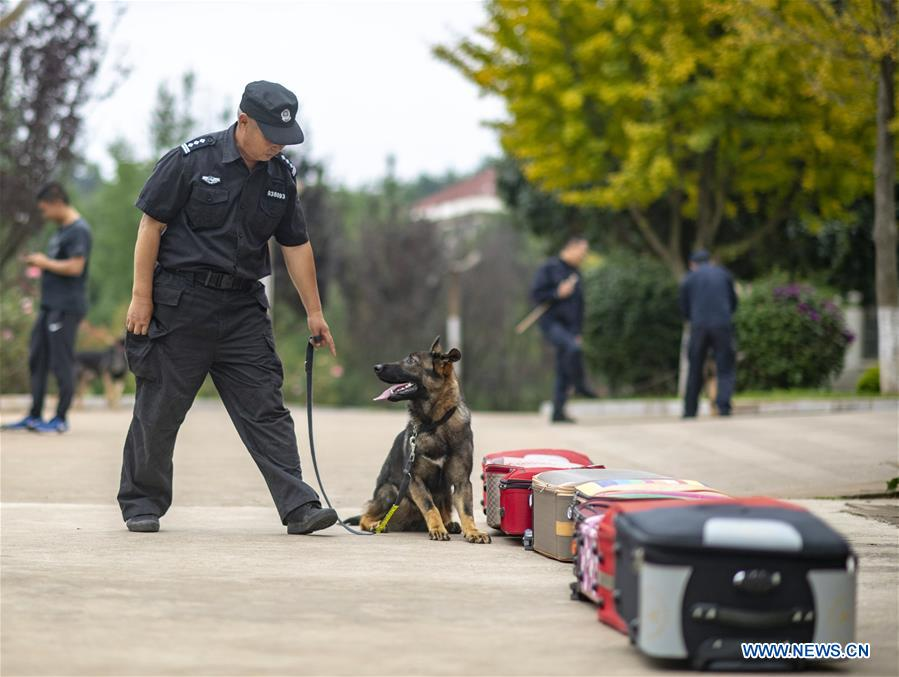 (SCI-TECH)CHINA-YUNNAN-FIRST CLONED POLICE DOG-ASSESSMENT (CN)