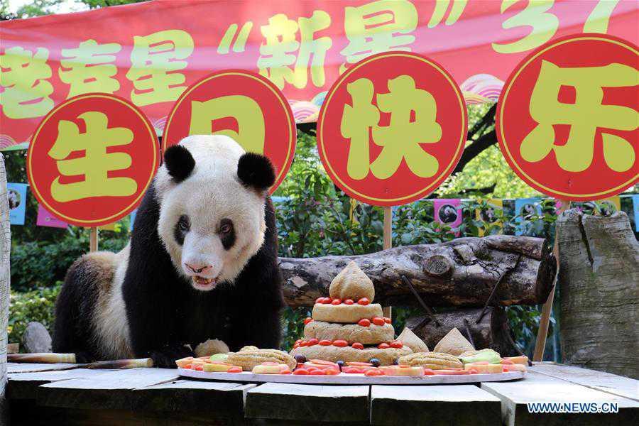 CHINA-CHONGQING-OLDEST PANDA-BIRTHDAY (CN)